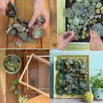 Cuadro con suculentas naturales para decorar las paredes en el hogar