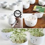 ¿Cómo decorar y reciclar tazones de sopa para convertirlos en macetas con brotes de diferentes semillas?